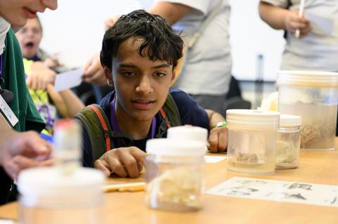 A young boy looks at animal brains in jars